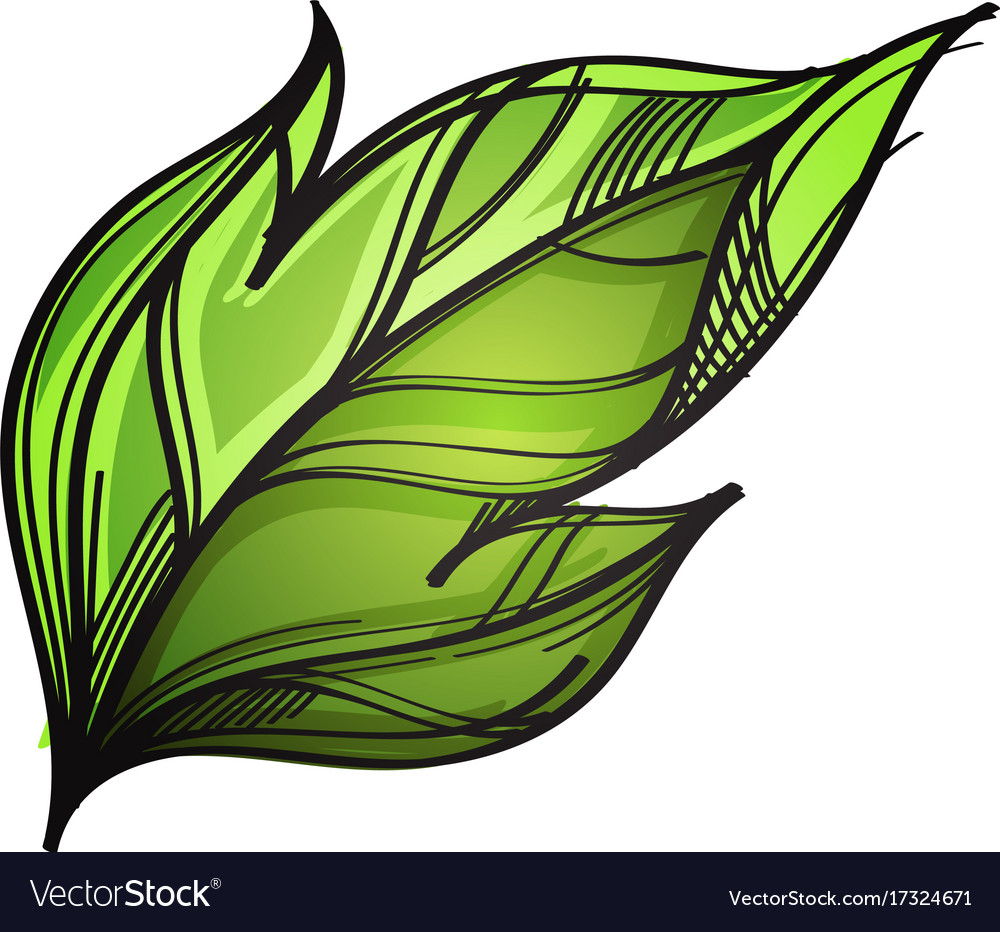 Green leaf hand drawn sketch style isolated on