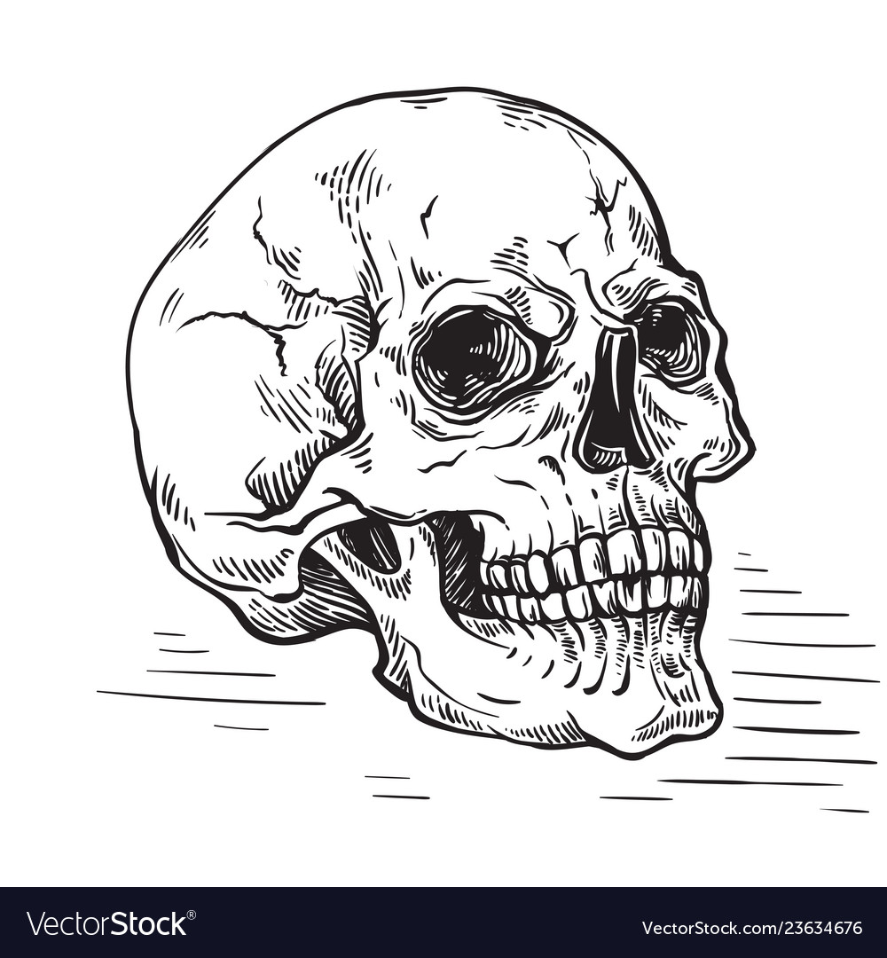 Hand drawn sketch anatomic skull vintage