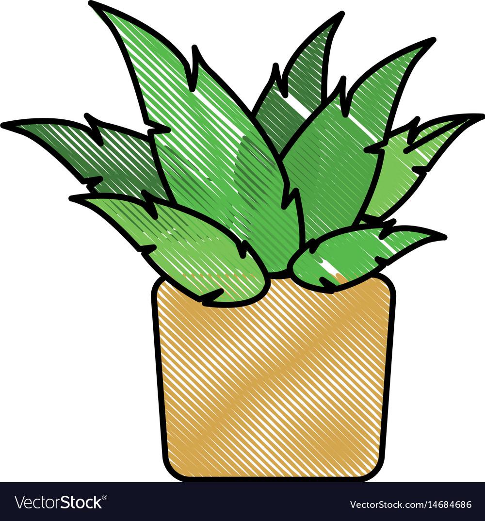 Drawing pot plant decoration botanic natural