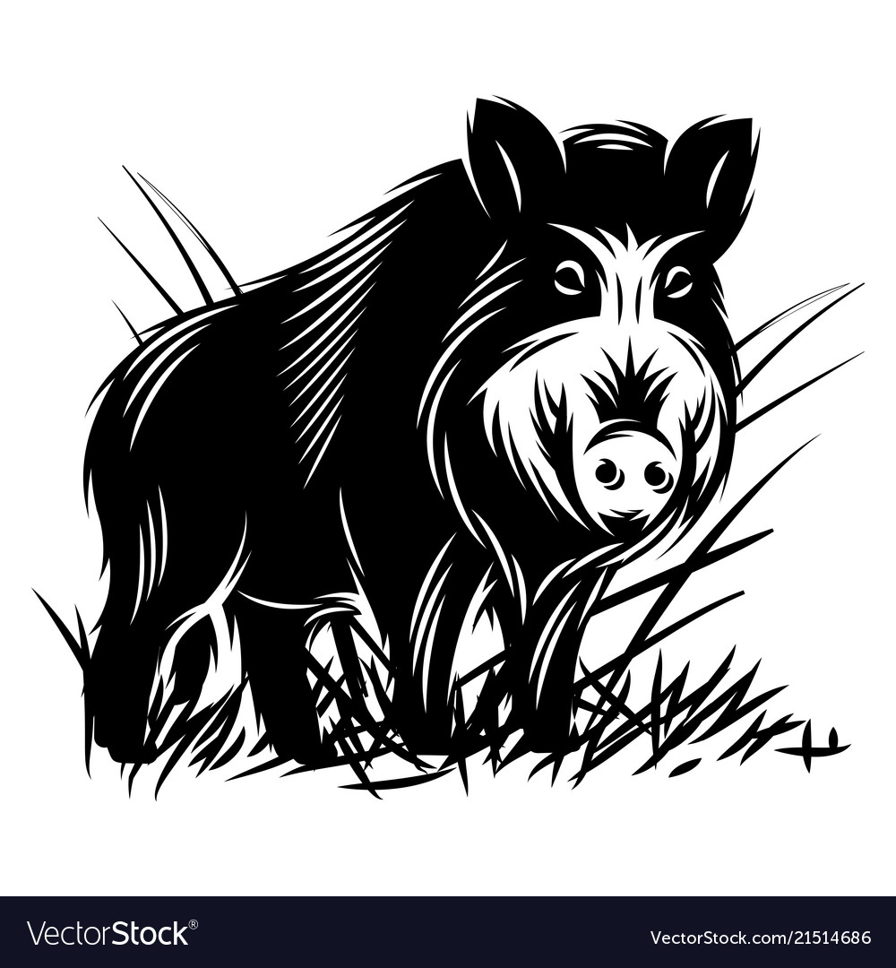 Monochrome with a wild boar in