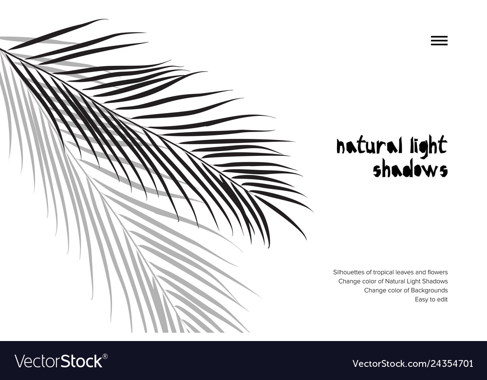 Abstract Banner With Black Tropical Leaves Shadow Vector Image You will receive 4 zip with 7 png, colored as shown on a transparent background, including: vectorstock