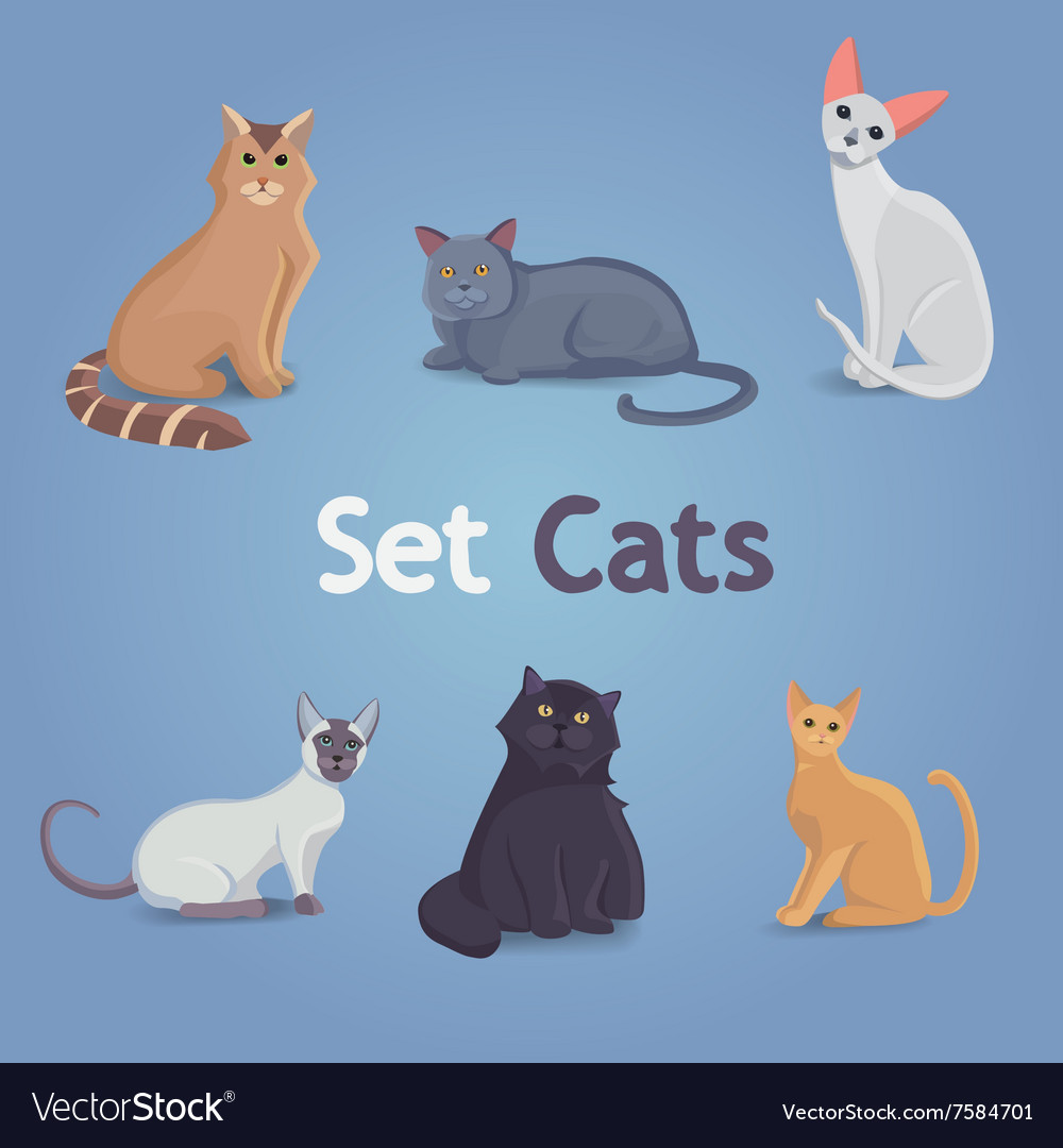 Collection of Cats of Different Breeds Set cats