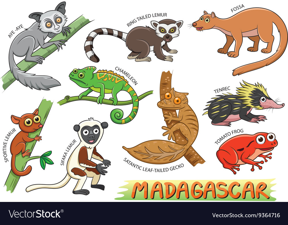 Set of cute animals cartoon in the Madagascar vector image