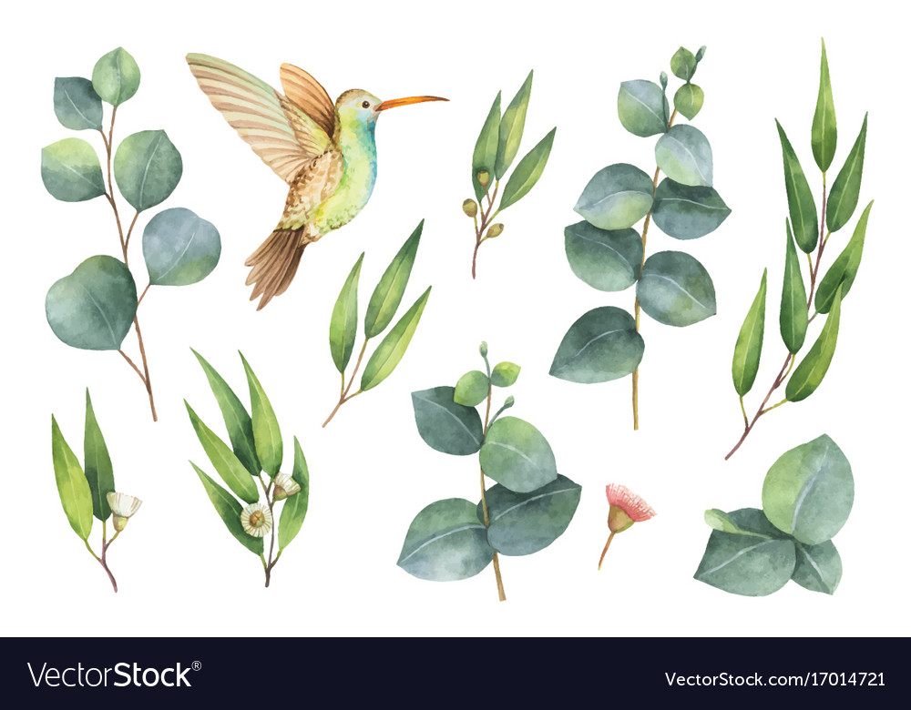 Watercolor hand painted set with eucalyptus vector