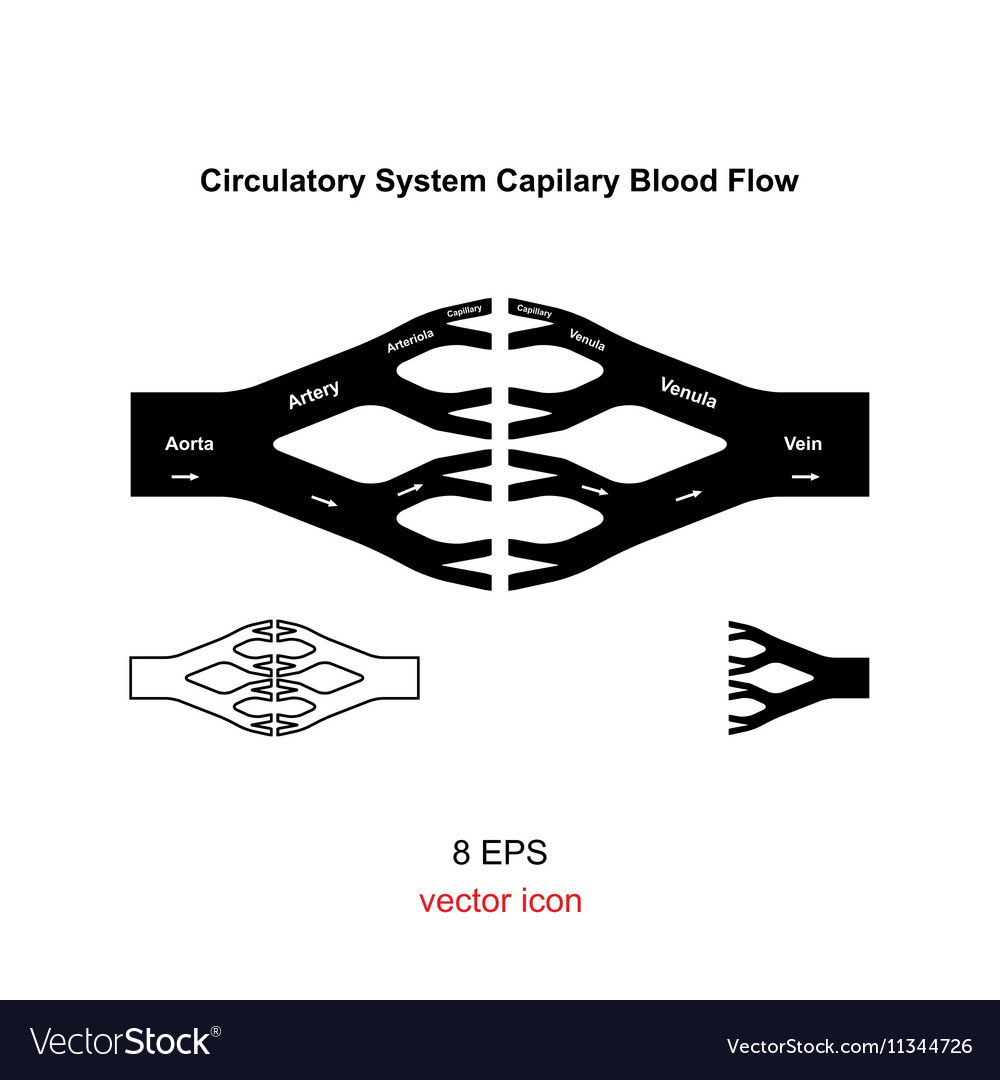 Blood Circulation System Royalty Free Vector Image