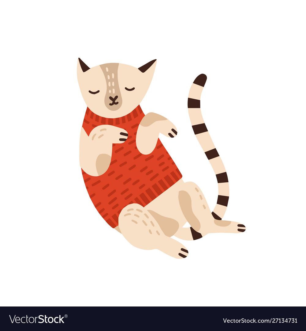 Cute cat in warm sweater flat