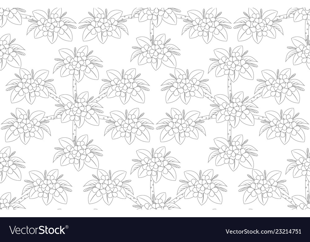 Outline of plumeria flower tree top view draw