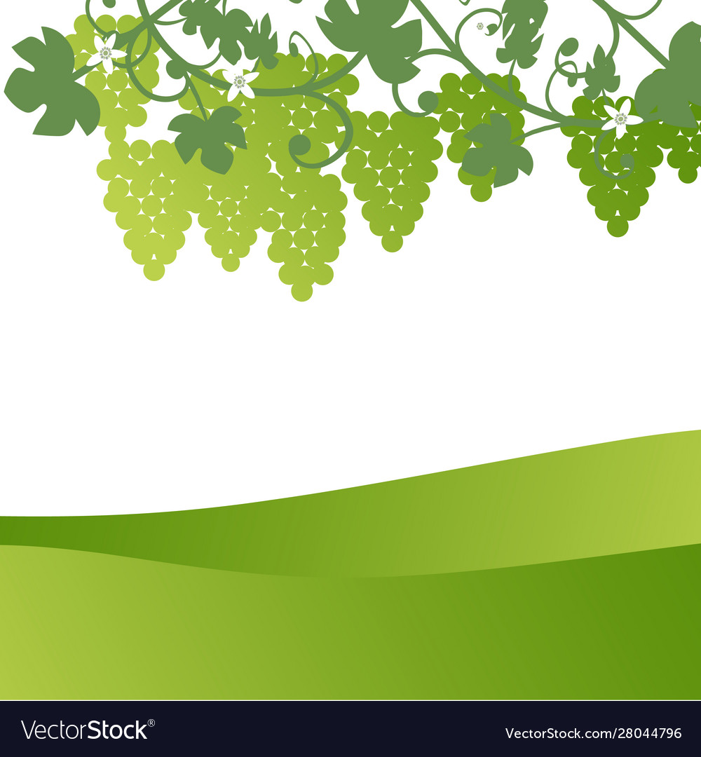 Background Countryside Landscape Grape Leaves Vector Image