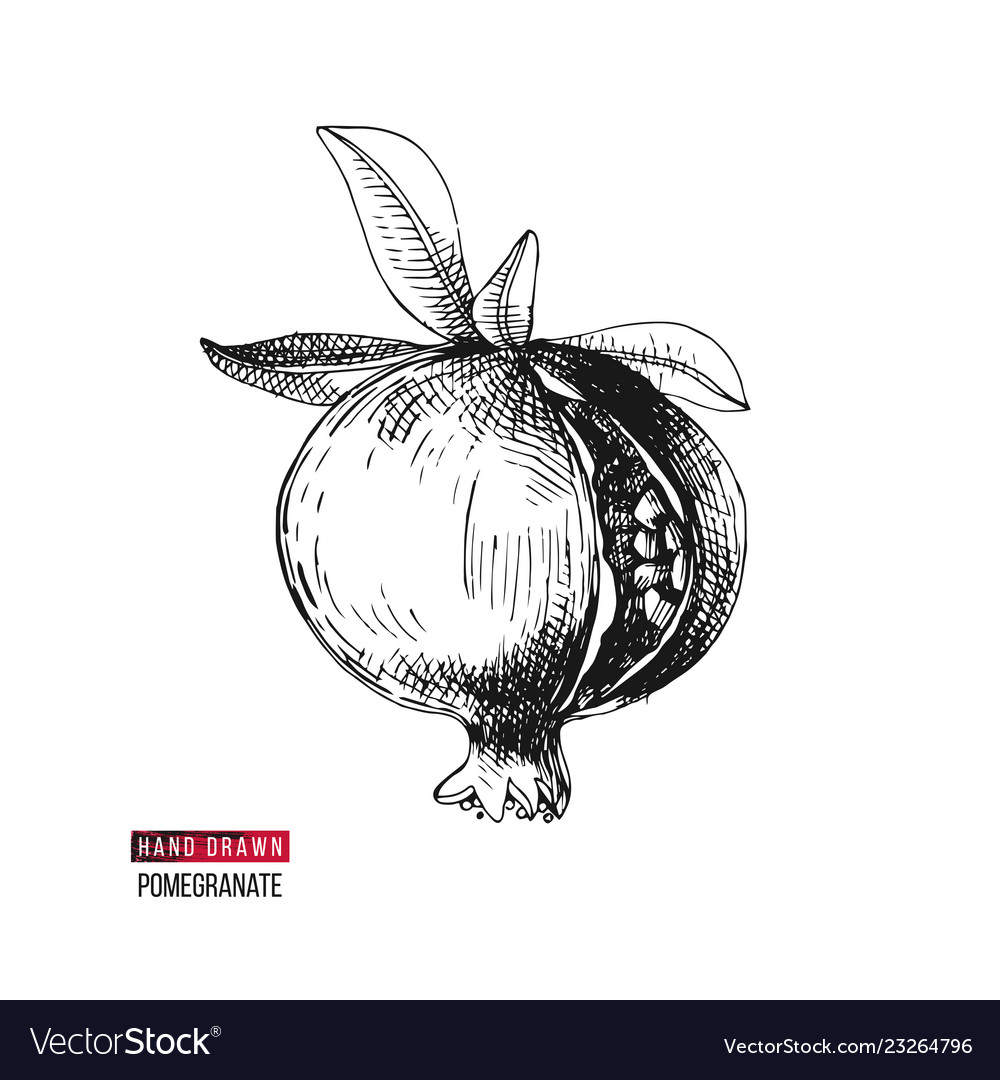 Hand drawn pomegranate