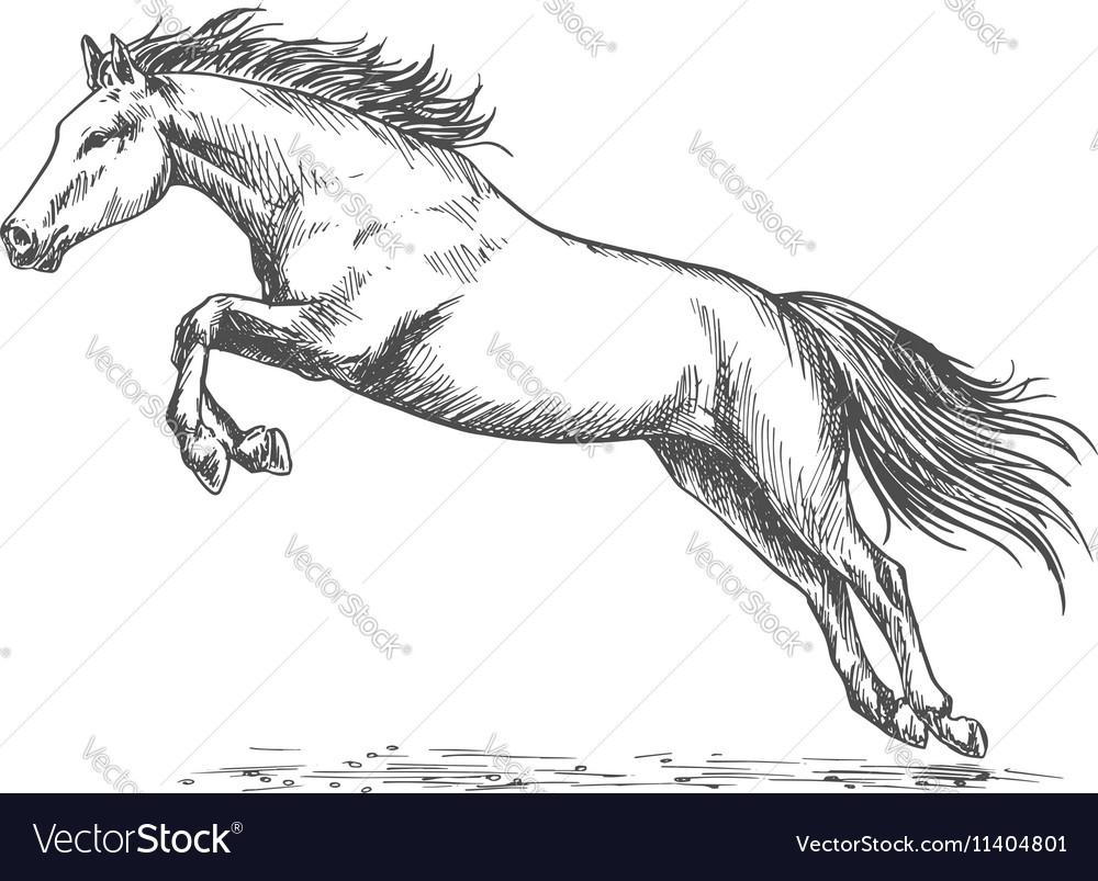 Race horse jumping high