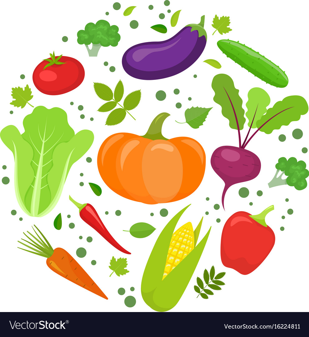 vegetable round template royalty free vector image