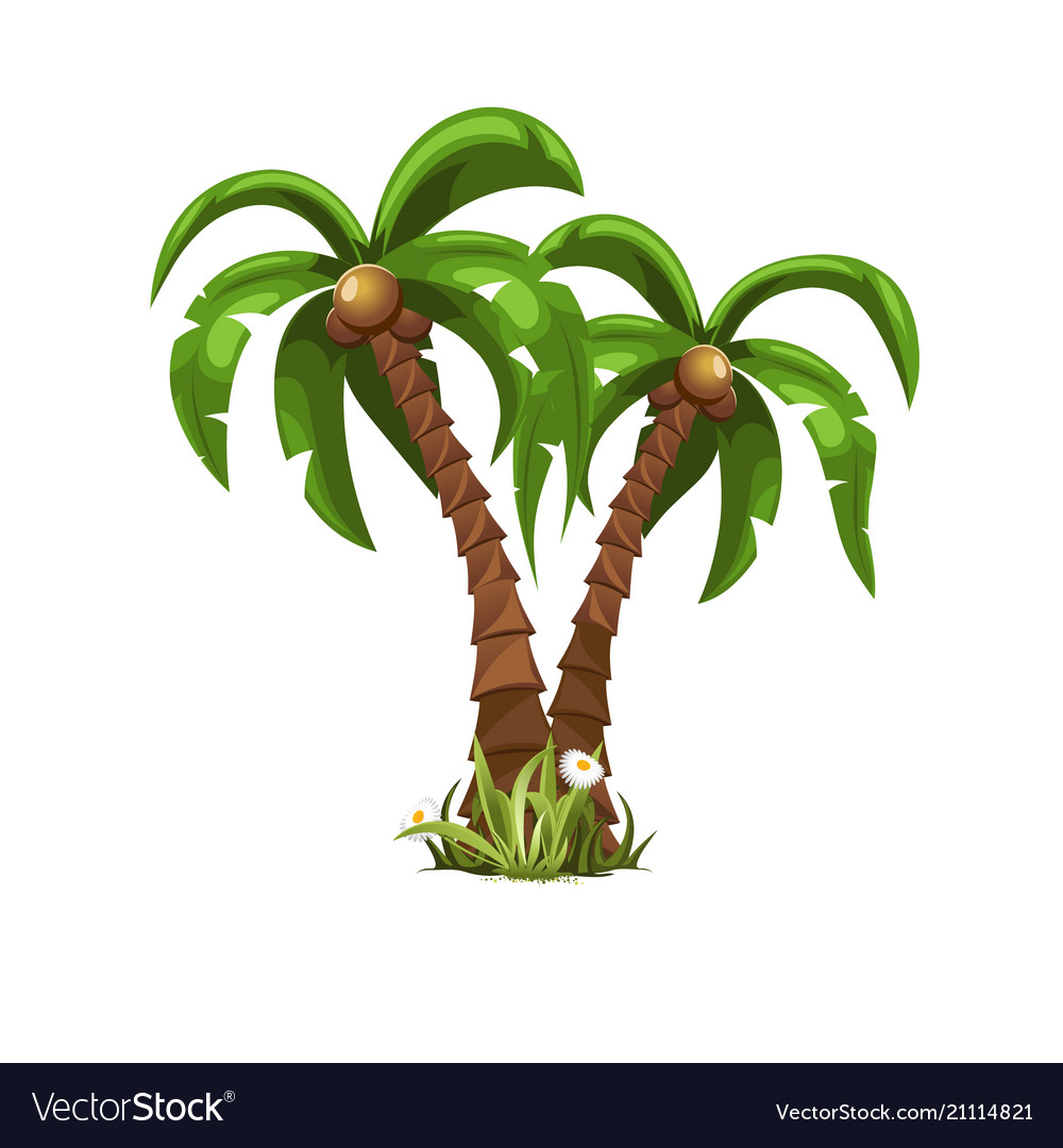 Two beautiful palm trees