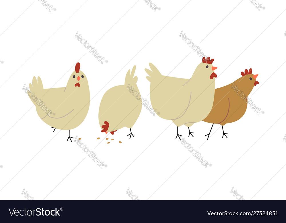 Cute farm chicken hen bird group isolated