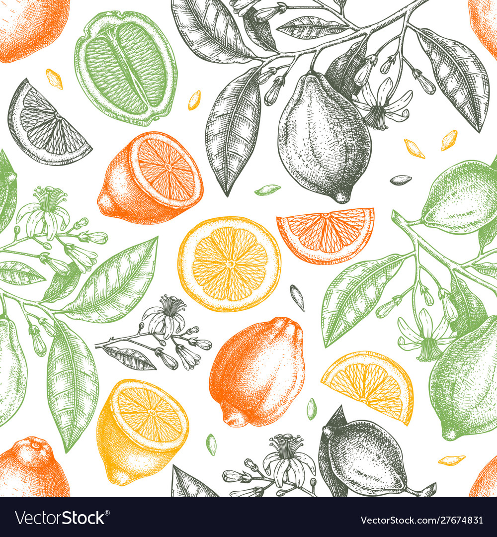 How to Grow and Use Citrus Fruits Flowers and Foliage Citrus