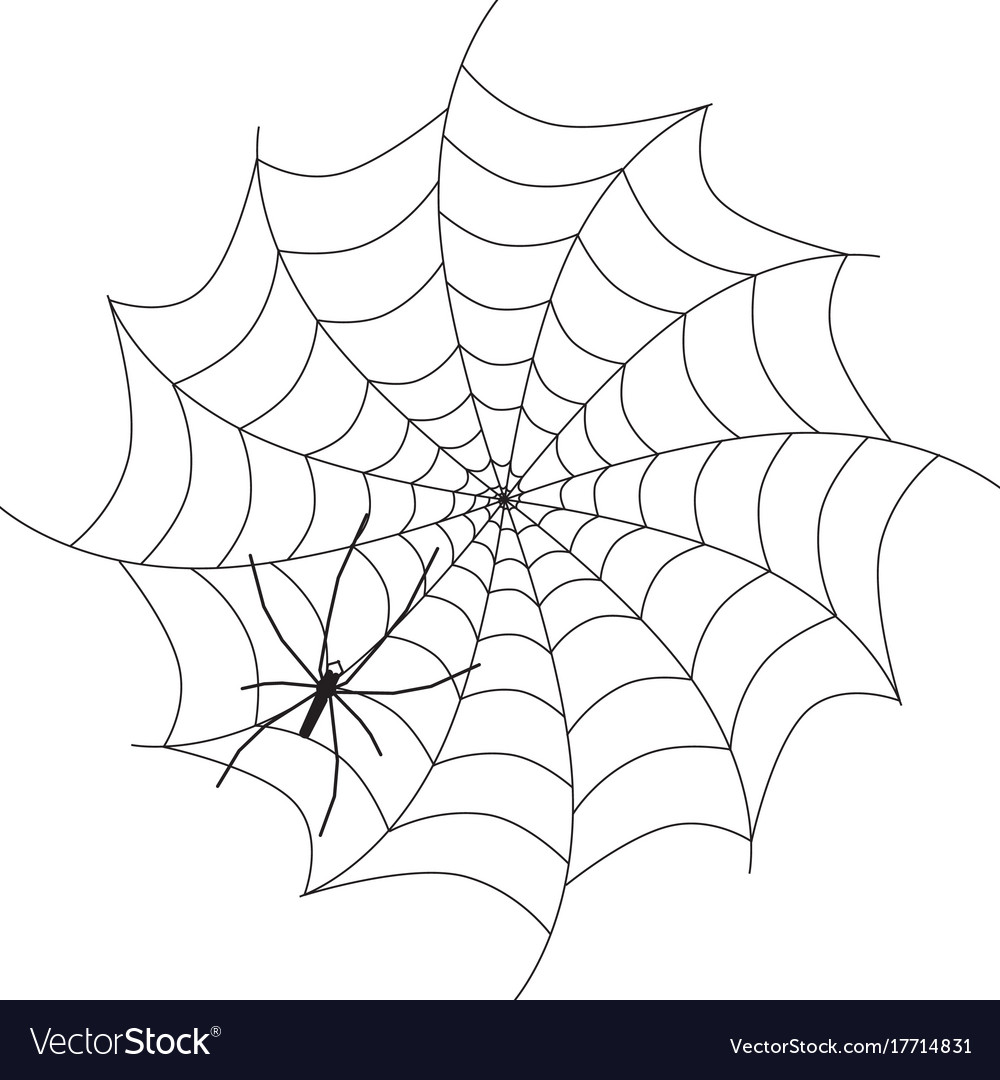 Spider on web black animal silhouette isolated on