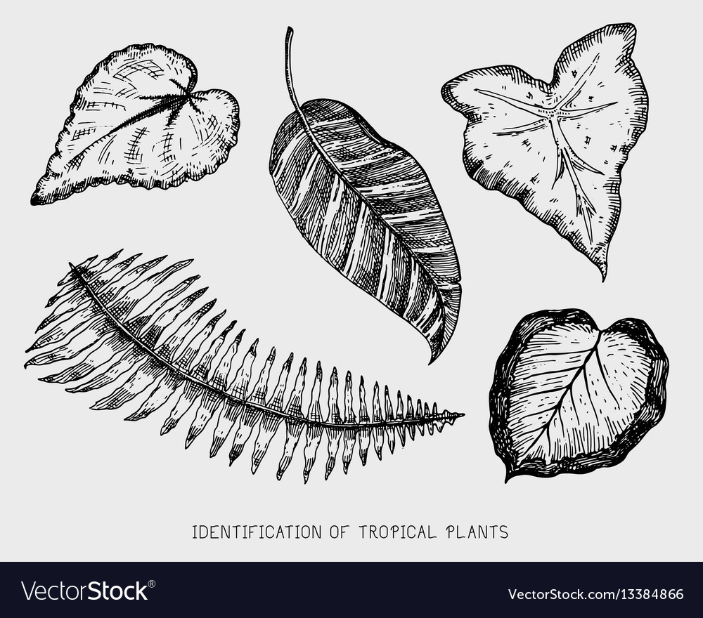 Engraved hand drawn tropical or exotic leaves