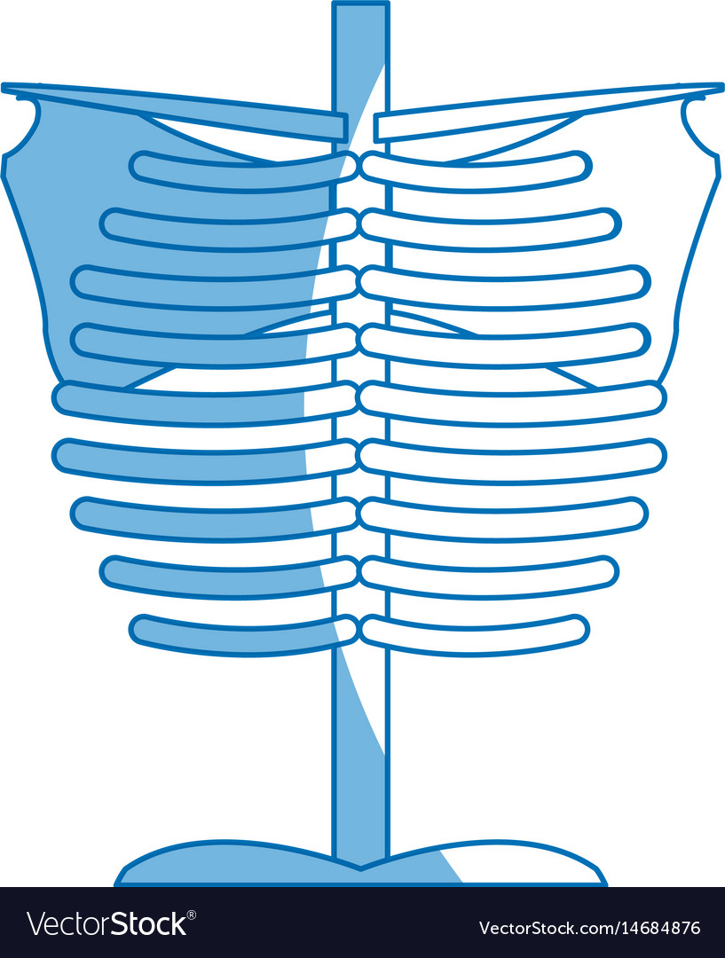 Skeleton chest human part anatomy