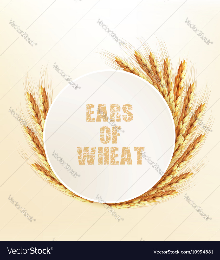 Nature background with ears of wheat