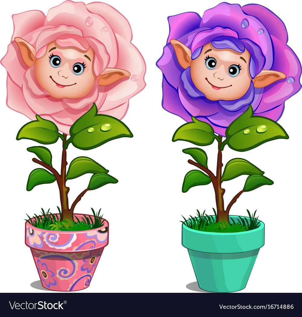 Flowers with human face and drops on leaves in pot