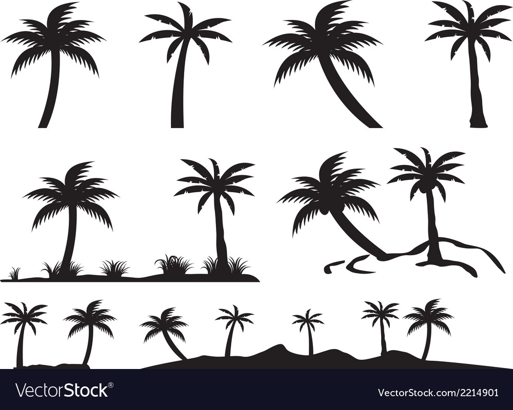 Palm trees and islands vector image