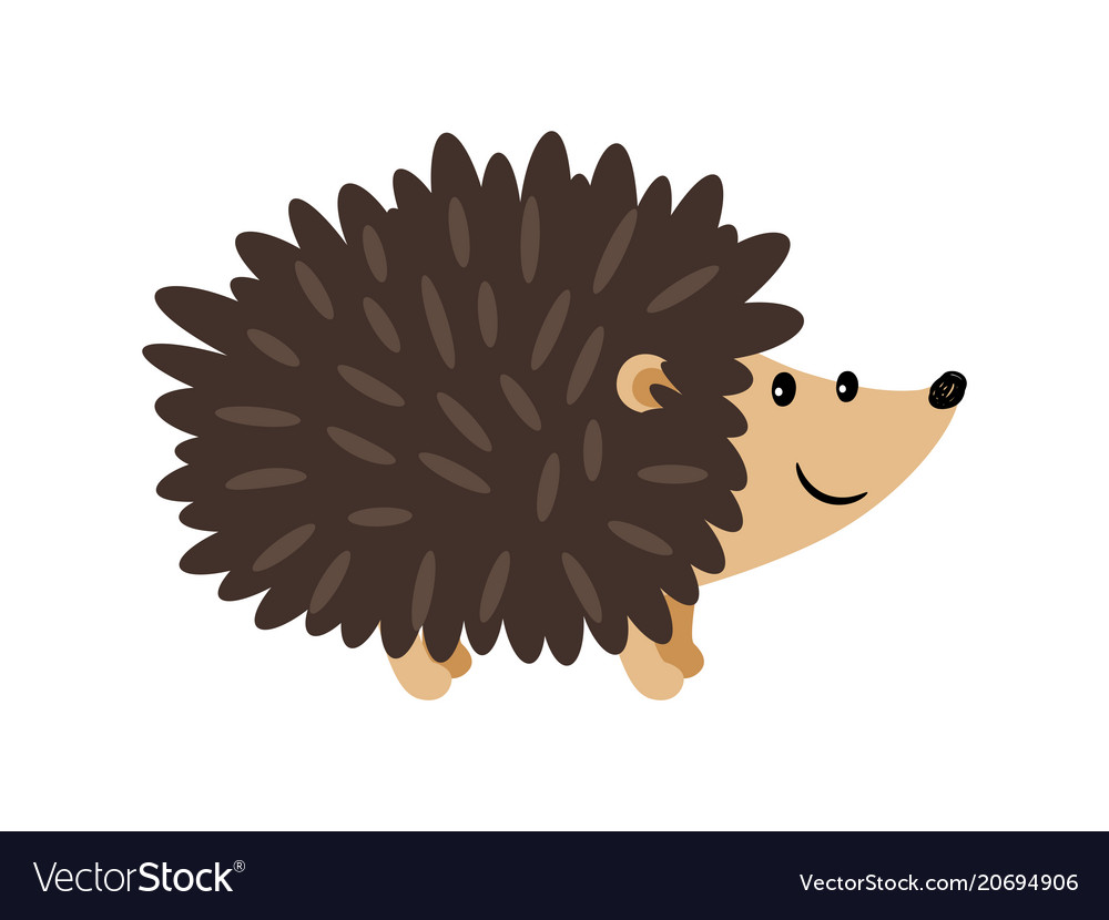 Image result for hedgehog image