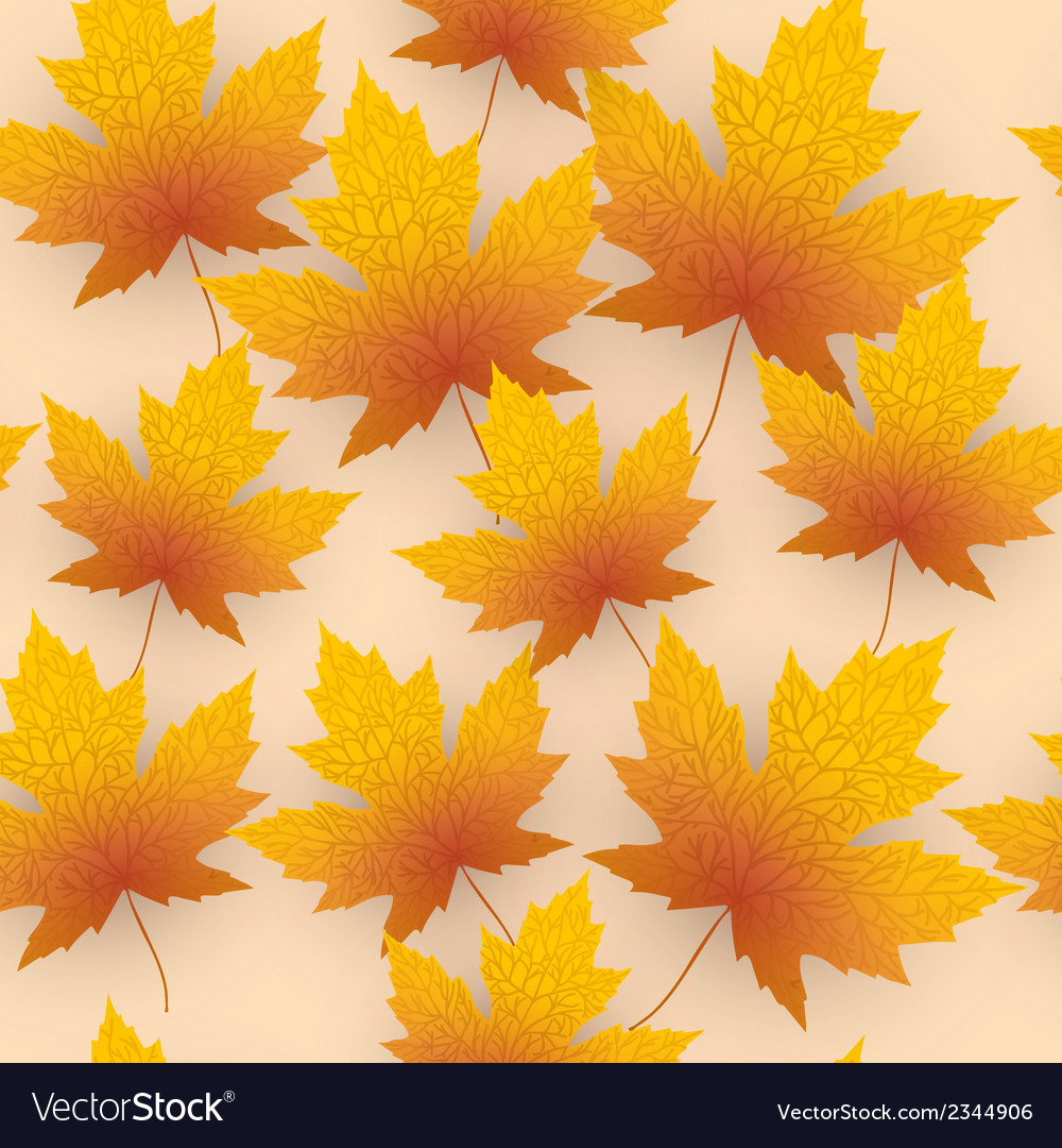 Maple leave fall background vector image