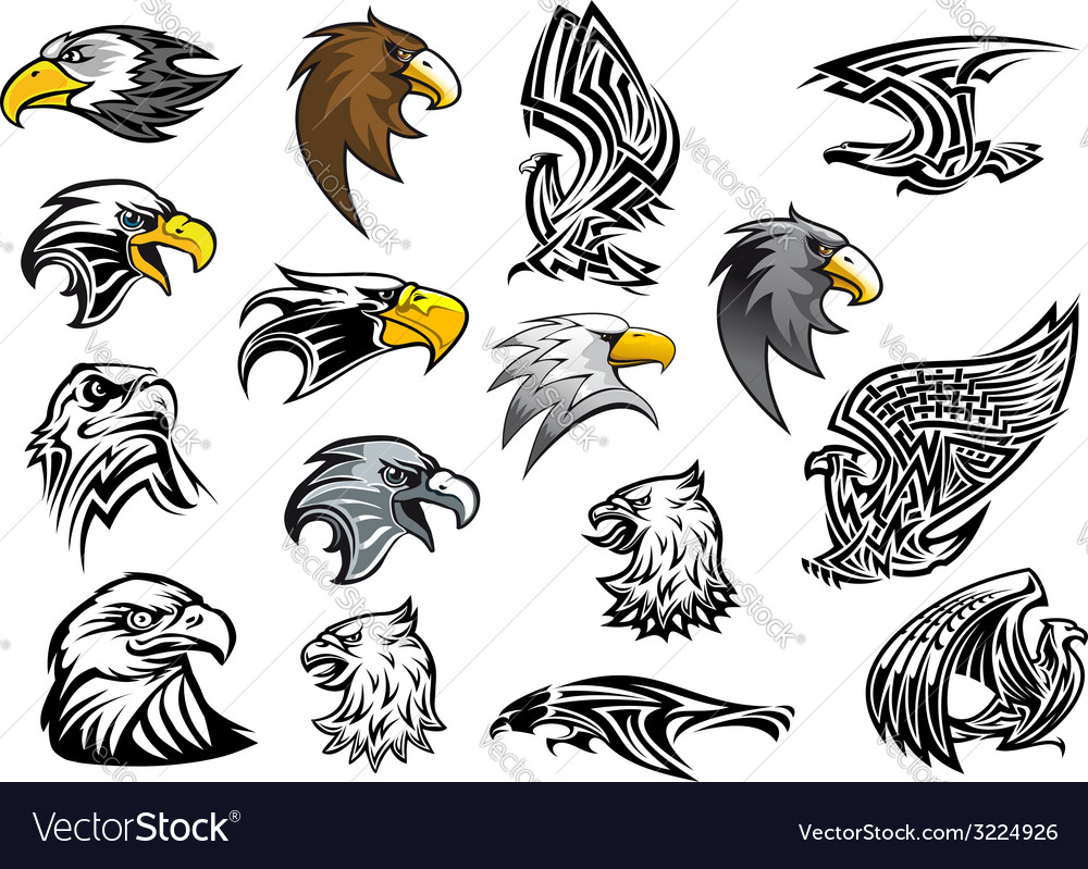 Cartoon eagle falcon and hawk heads vector image