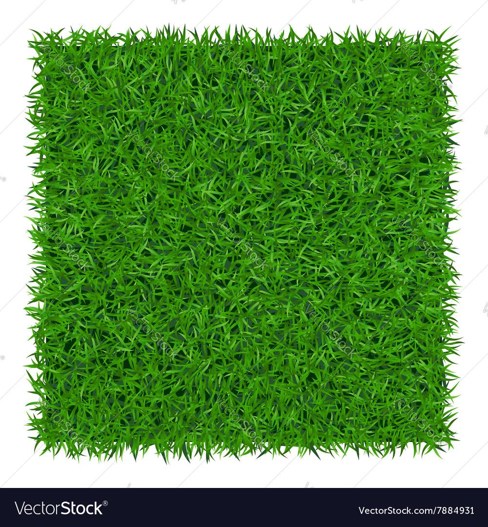 Green grass background 1