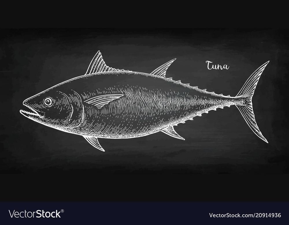Chalk sketch of tuna