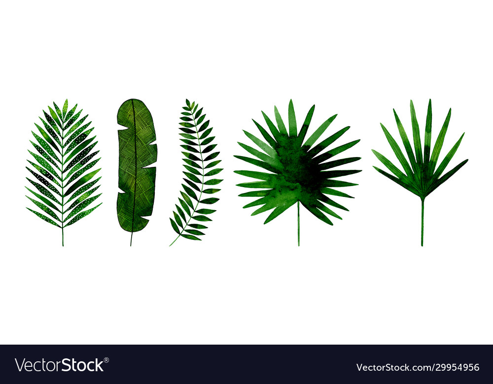 Tropical Leaves Hand Painted In Watercolor Vector Image Are you searching for tropical leaves png images or vector? vectorstock