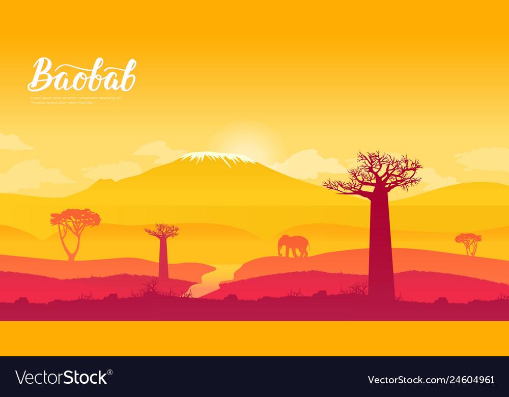 Baobab tree in namibia africa land page