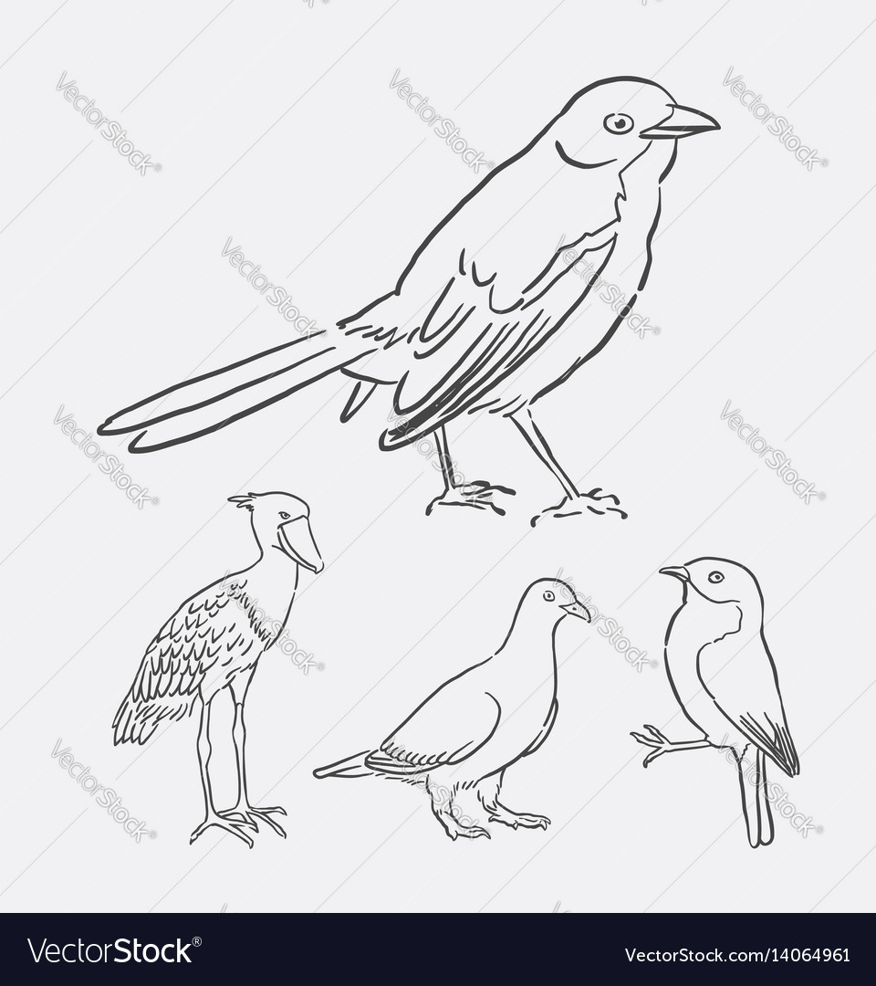 Bird poultry animal hand drawing style
