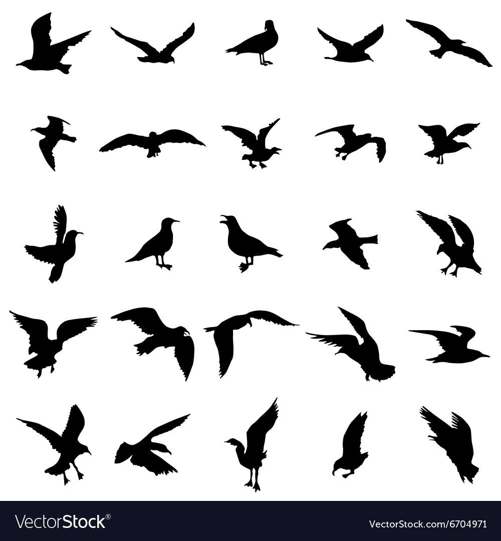 Gull silhouettes set