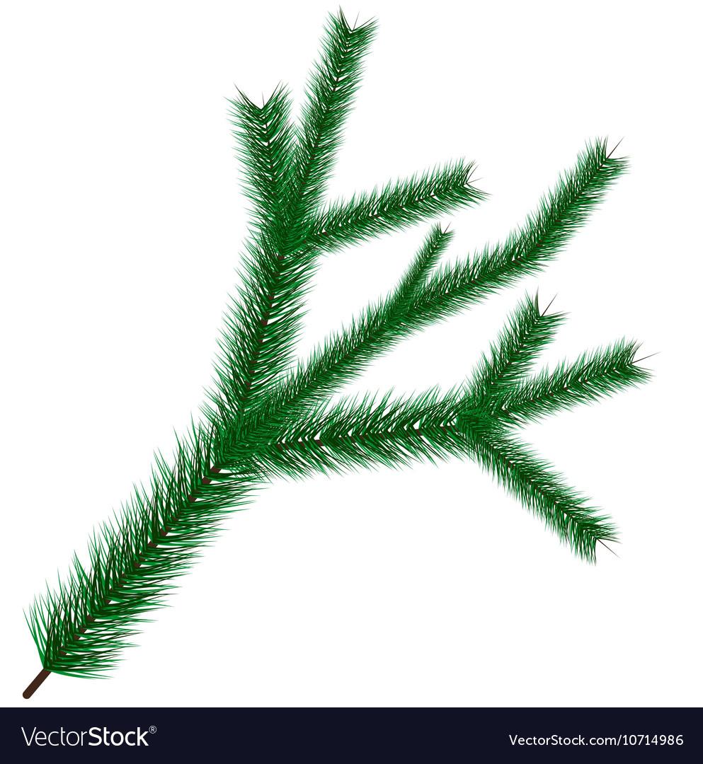 Christmas tree branche vector image