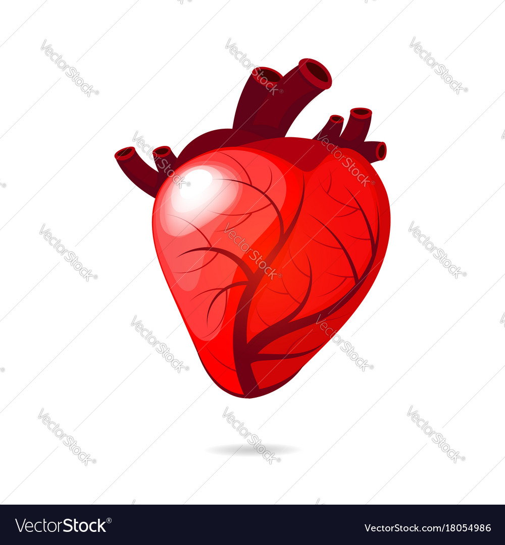 Isolated engraving colorful red human heart