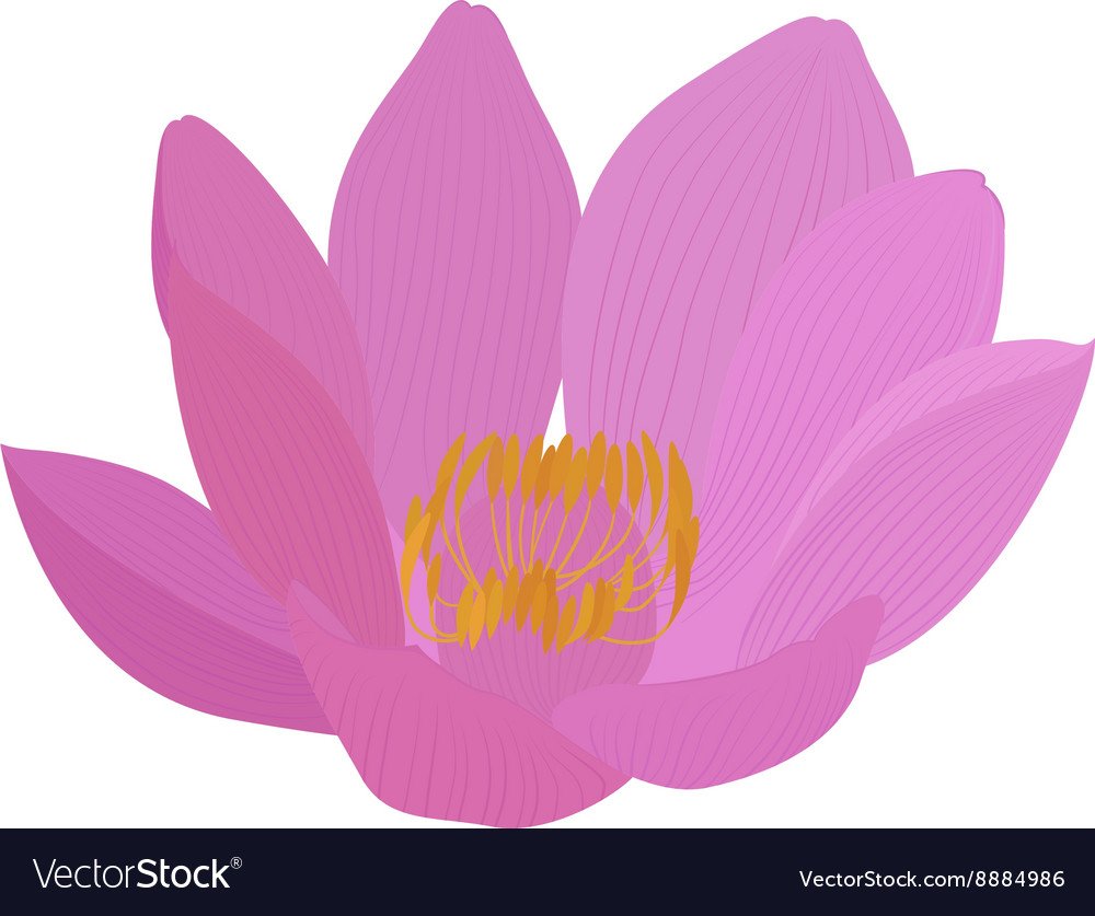 Lotus pink flower icon royalty free vector image lotus pink flower icon vector image mightylinksfo