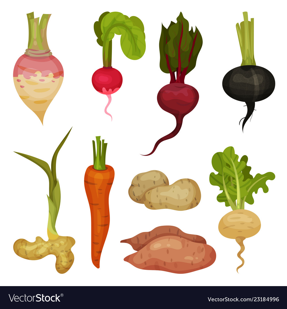 Flat Set Of Different Root Vegetables Royalty Free Vector