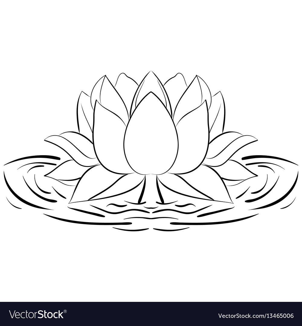 Lotus sketch flower design elements