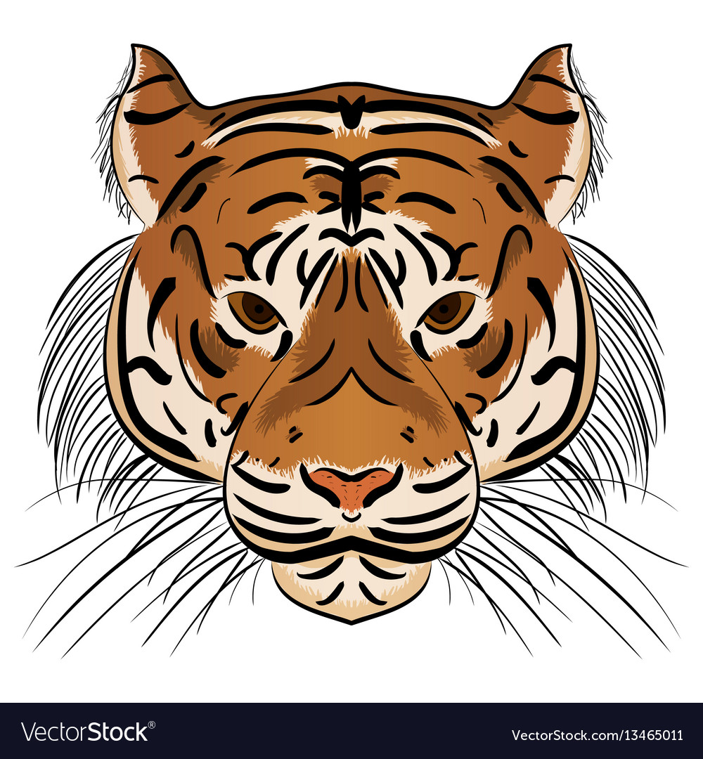 Head ferocious tiger vector image