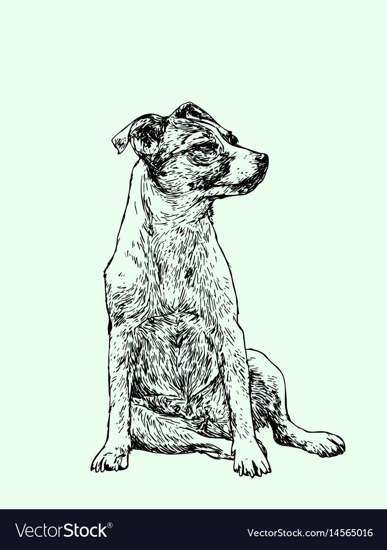 Hand drawn portrait of a cheerful dog