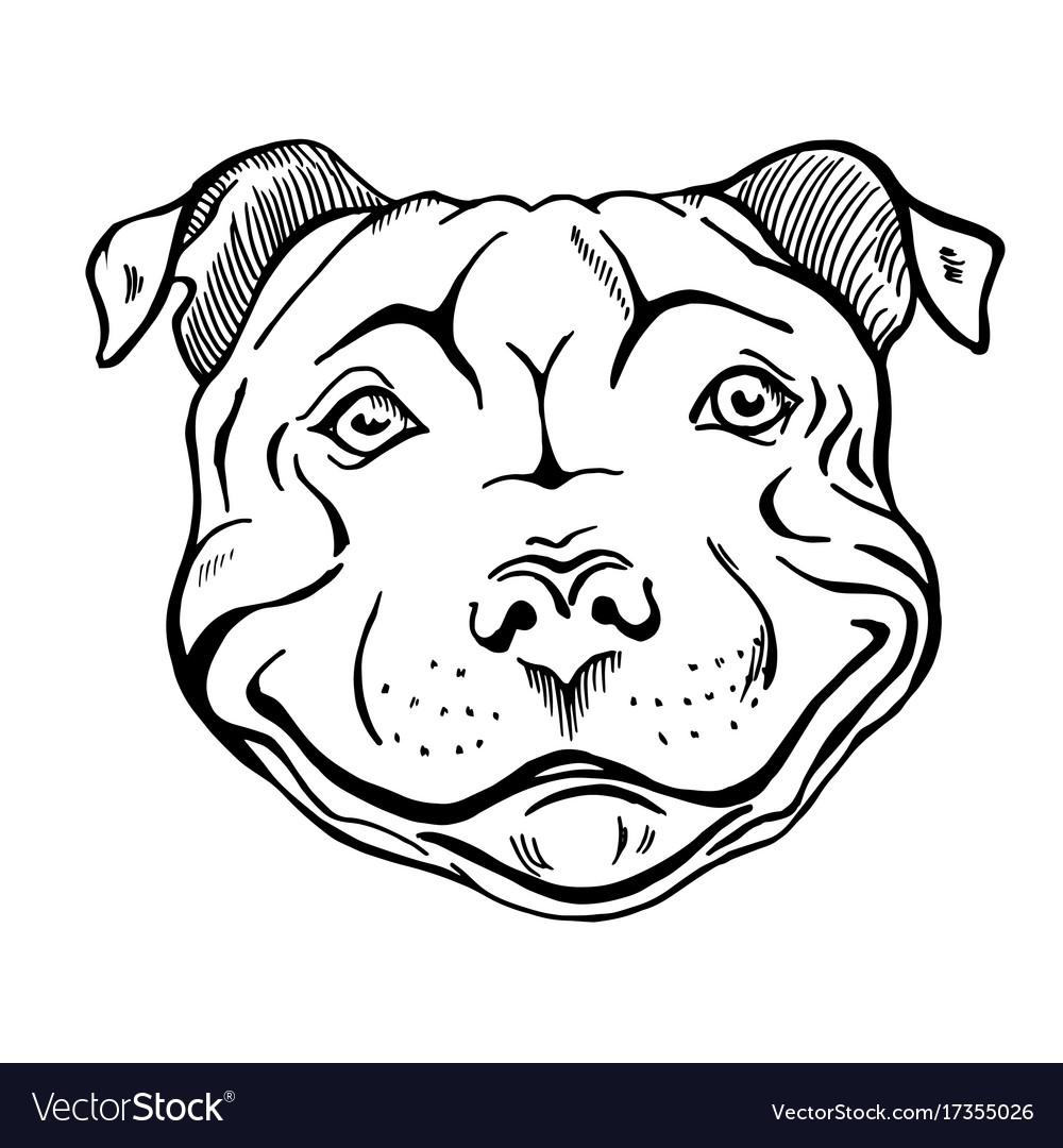 Smiling dog face portrait