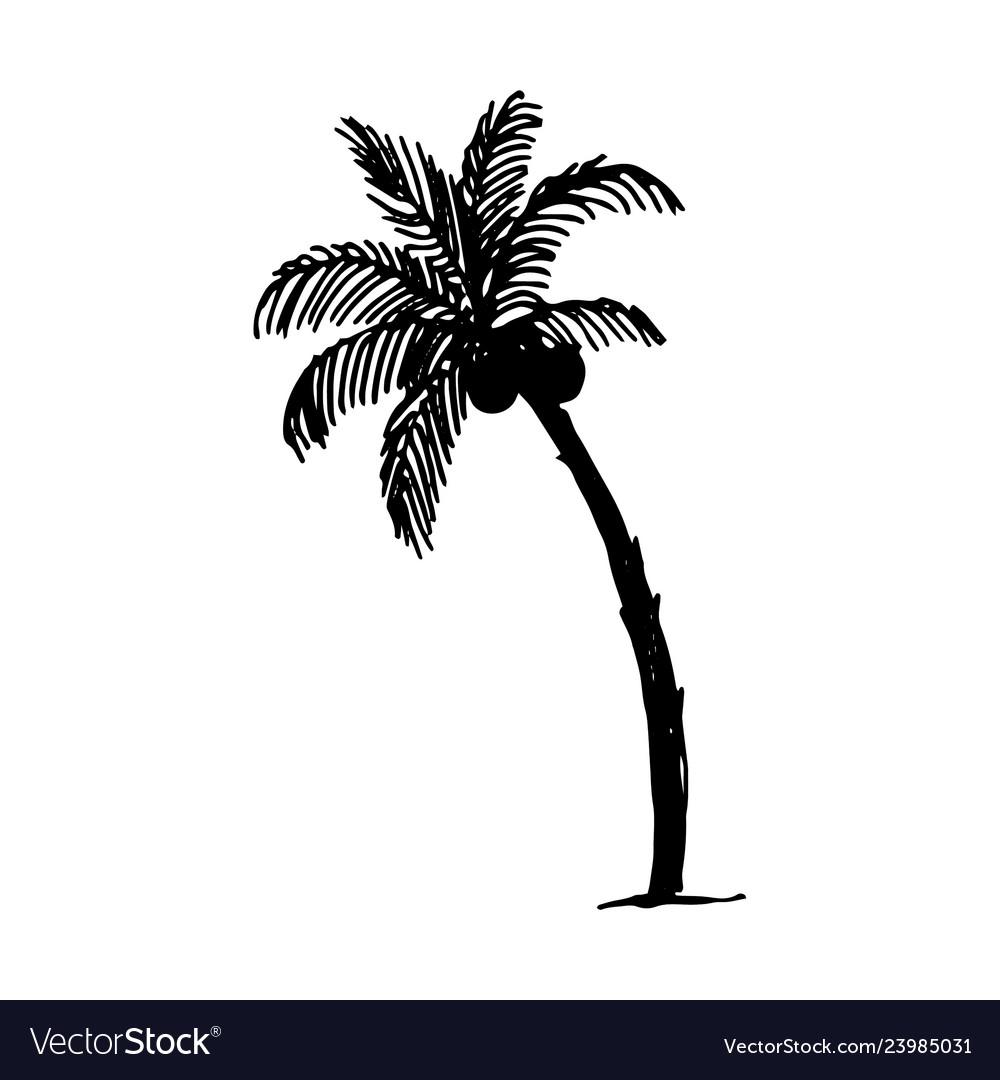 Hand drawn sketch of palm logo