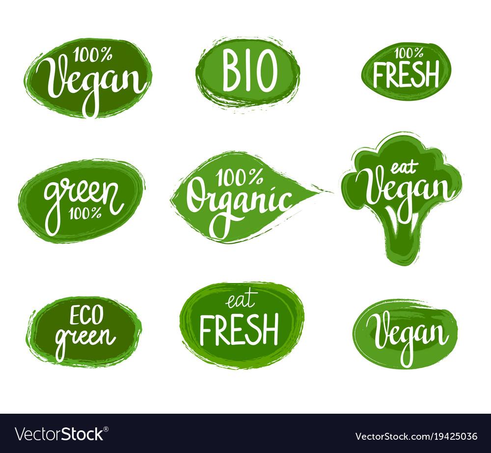 Lettering eco green nature organic vegan vector image