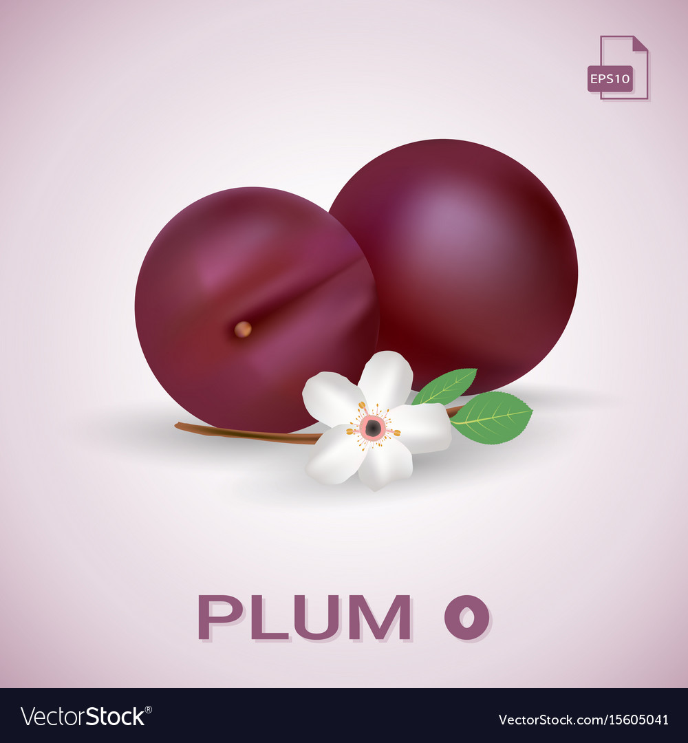 Set of two fresh ripe plums with leaves and