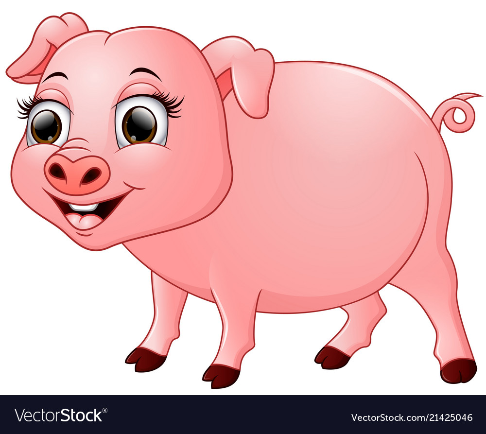 Cute baby pig cartoon isolated on white background