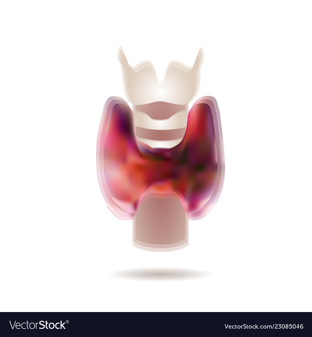 Of Diagram Of Thyroid Gland Royalty Free Vector Image