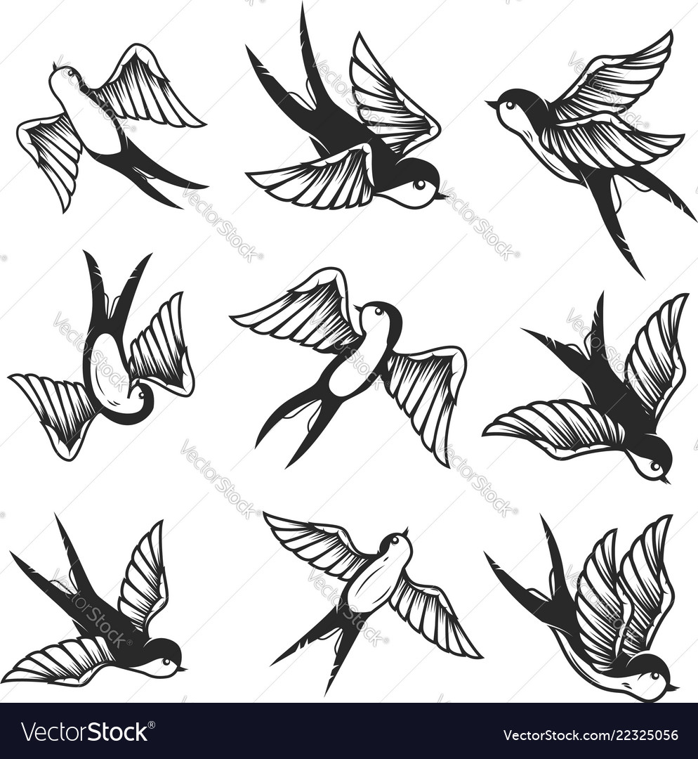 Set of swallow on white background design element