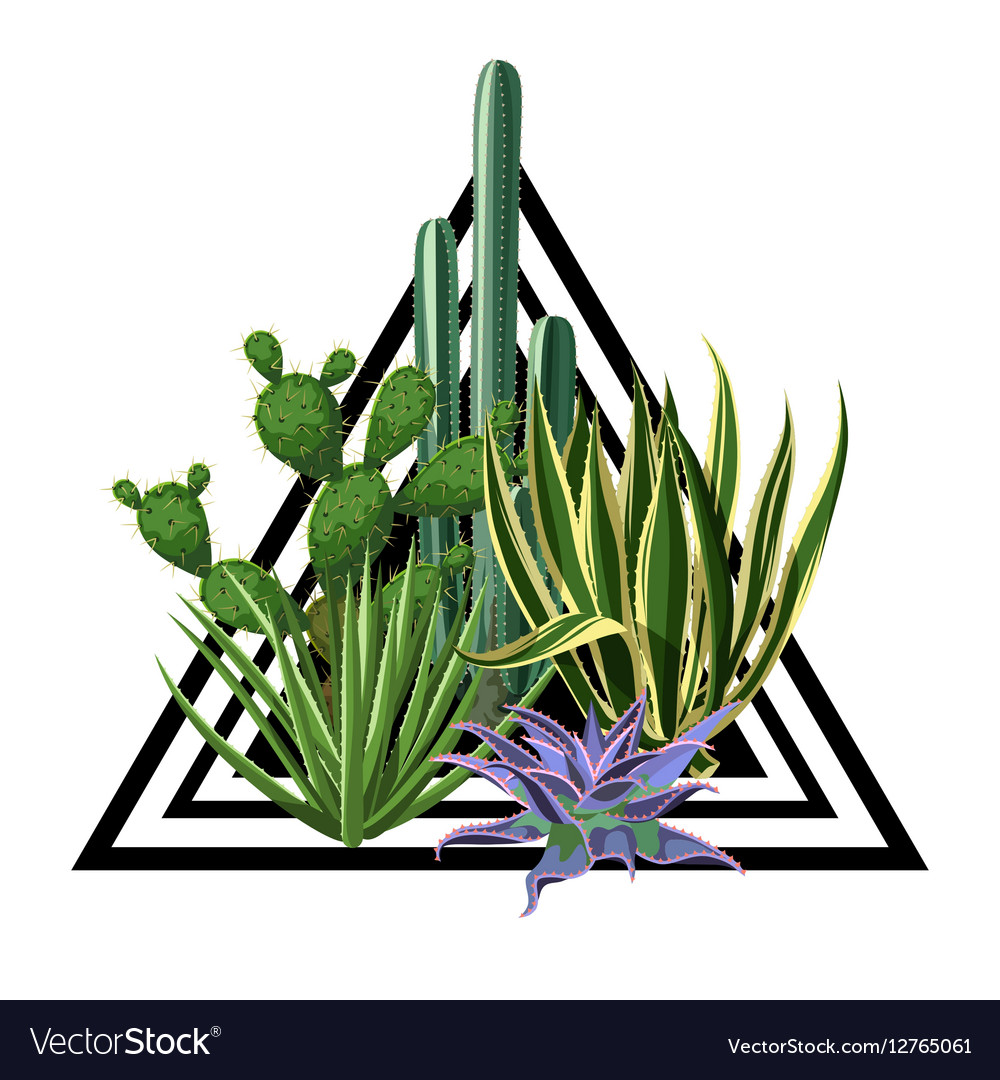 Print with cactuses and succulents set Plants of vector image