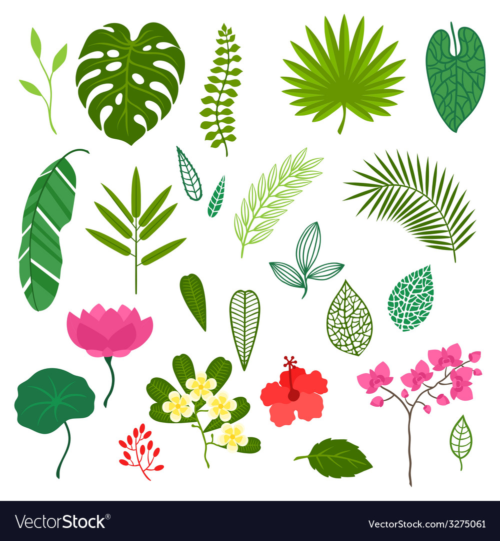 Set of stylized tropical plants leaves and flowers vector image