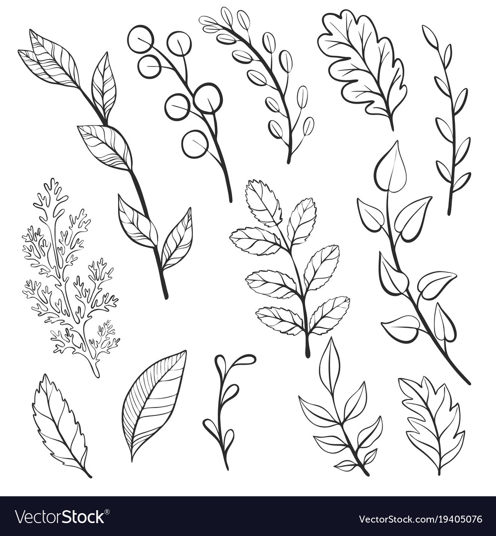 Doodle Leaves And Plants Royalty Free Vector Image